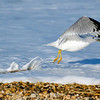 Taking Flight, Rehoboth Beach, Delaware