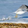 Taking Flight, Rehoboth Beach, Delaware