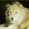 King of the Jungle, Philadelphia Zoo