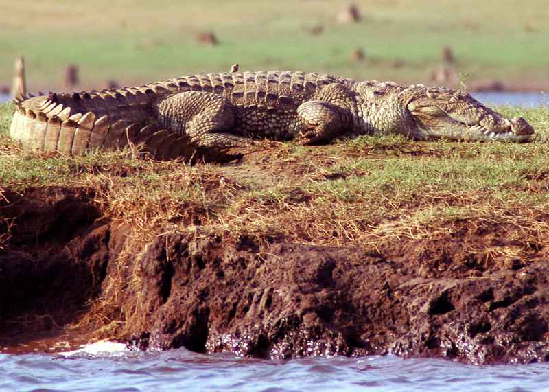 April 28th, 2006.<br /> A croc on the river bank.