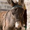 Baby Donkey, Erfoud, Morocco