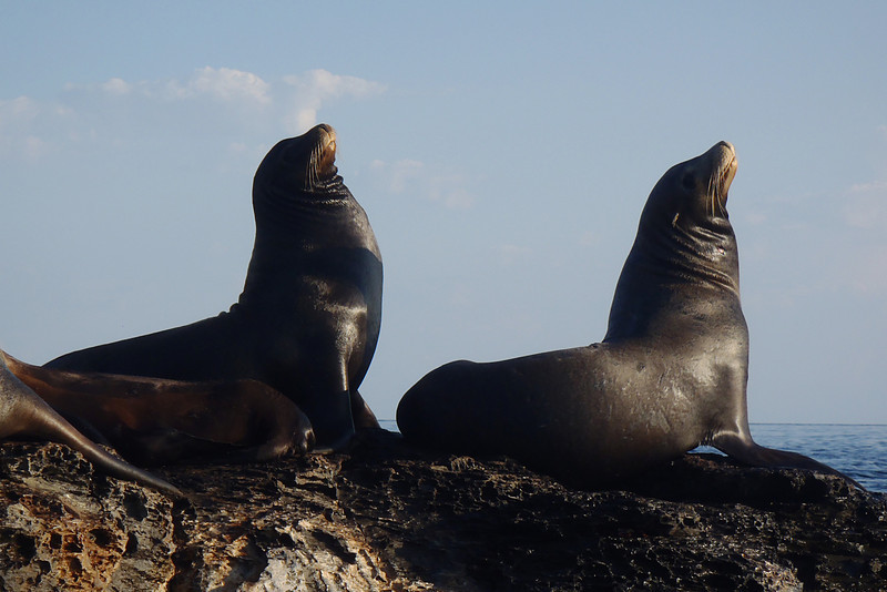 Sea Lions on Coronado Island, the Sea of Cortez, Baja California Sur, Mexico