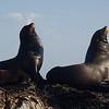 Sea Lions on Coronado Island, the Sea of Cortez, Baja California Sur, Mexico