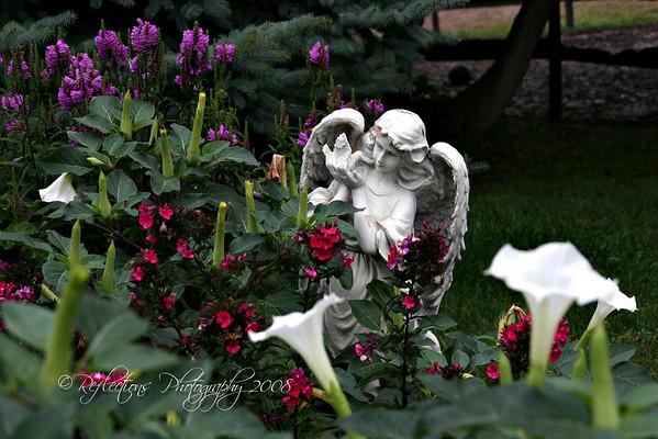 Nancy  & Tom's garden