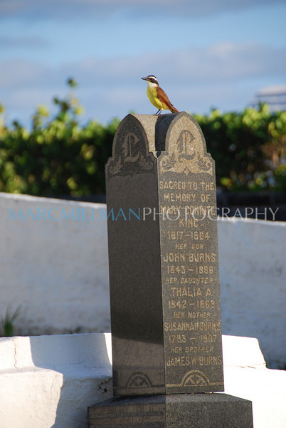 Kiskadee (St. Anne's Church, Bermuda- Sat 101 10 09)