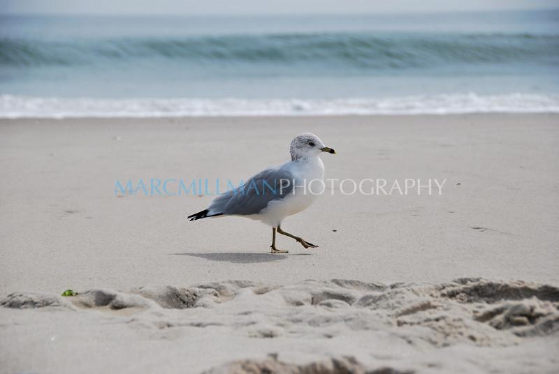 Seagull (Tue 9 15 09)