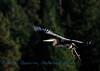 Heron Climbin