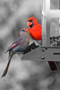 Cards on Feeder