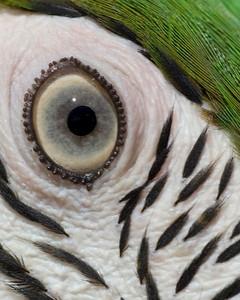 bird's eye view 2