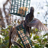 Starling v. Flicker