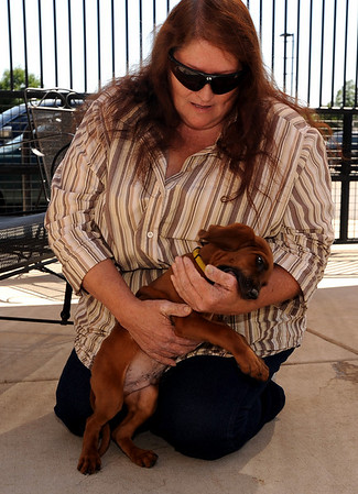 """Kathy Schlereth of Boulder came to meet Ferris the dog, who is staying at the Boulder Humane Society. Ferris was taken from the humane society and returned by another person who is first in line to get Ferris. Kathy would be second and hopes to get him for her grandson.<br />  For a video of Ferris and Kathy, go to  <a href=""""http://www.dailycamera.com"""">http://www.dailycamera.com</a>.<br /> Cliff Grassmick / August 28, 2009"""