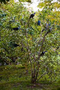 168_0147_Birds in Tree 01