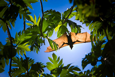 02 - 1800x1200_Bat Takes Flight