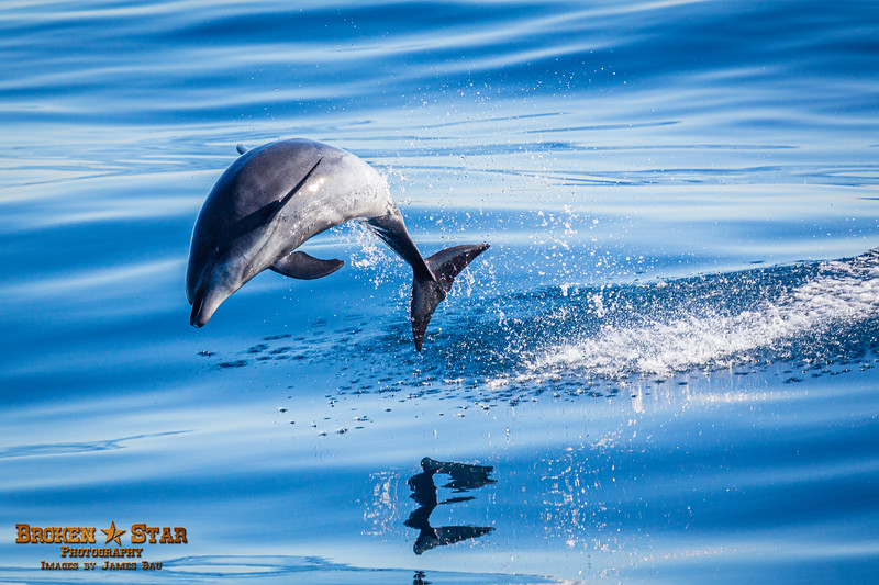 Bottlenose Dolphin Launching, Shot 3 of 4