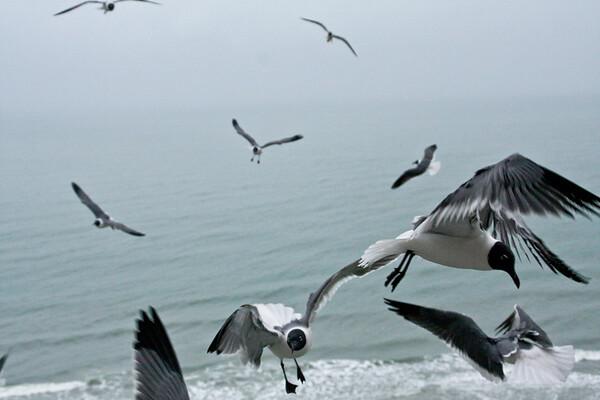 sea_gulls-3