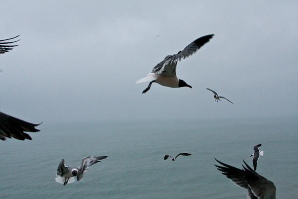 sea_gulls-1