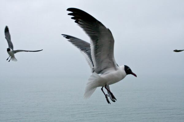 sea_gulls-8