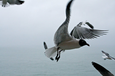 sea_gulls-7