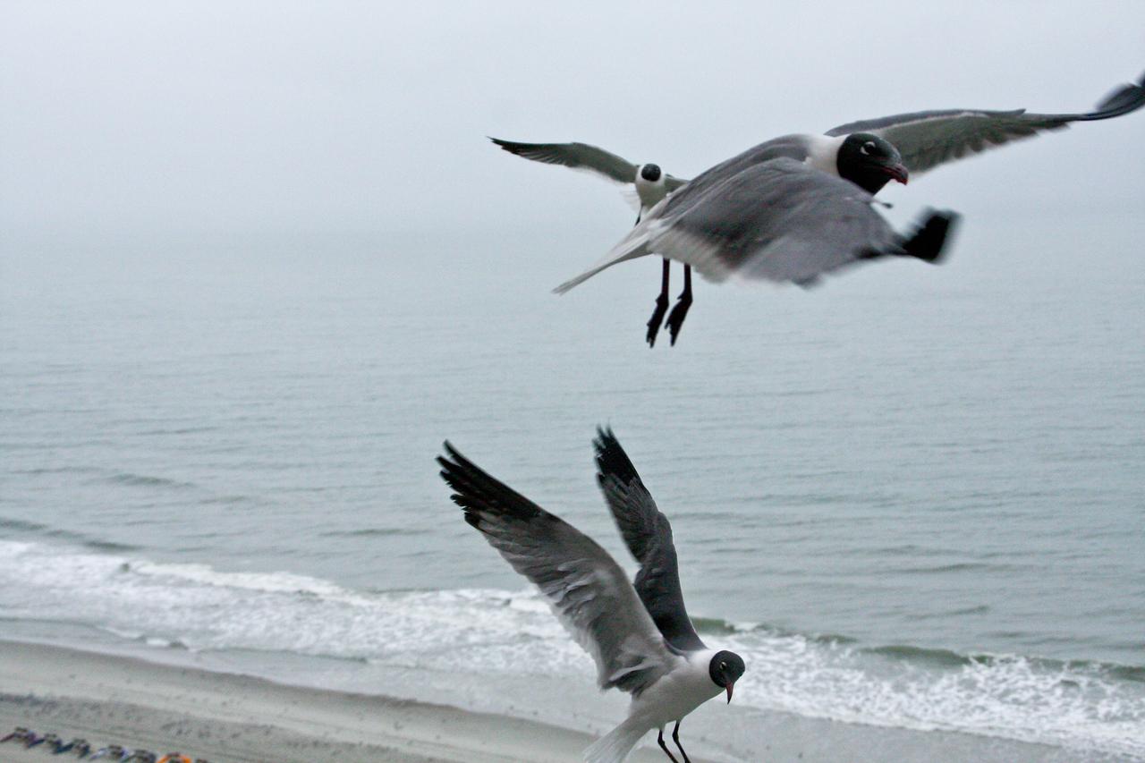 sea_gulls-6