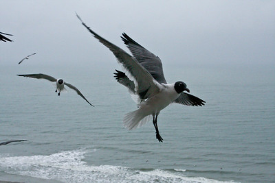 sea_gulls-5