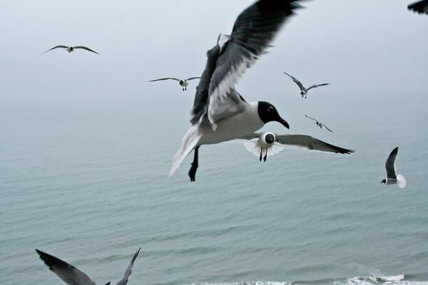 sea_gulls-2