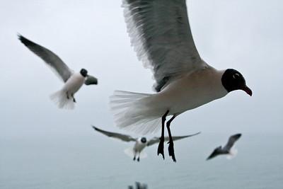sea_gulls-4