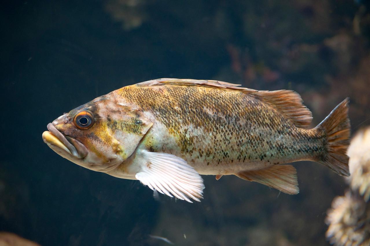 Ocean Bass