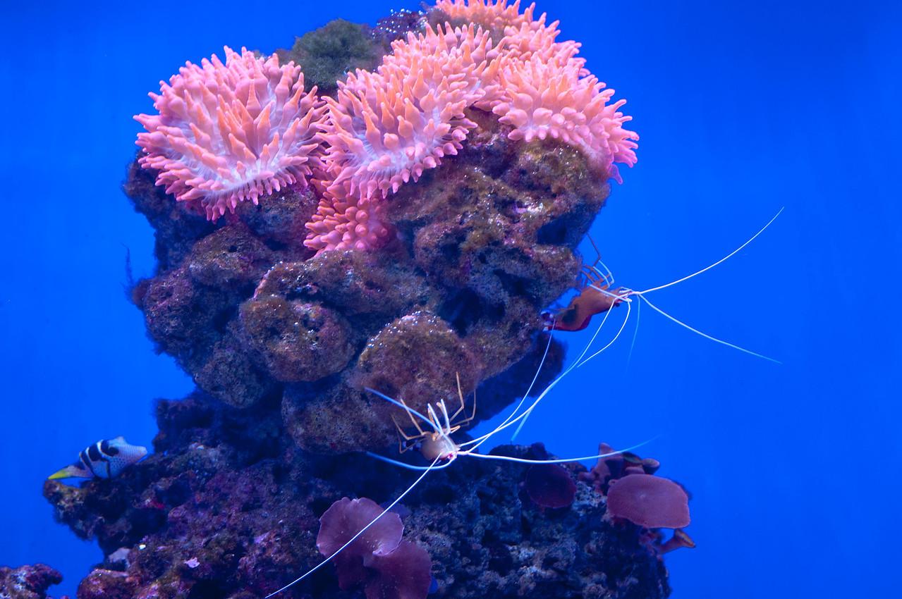 upside Down Shrimp
