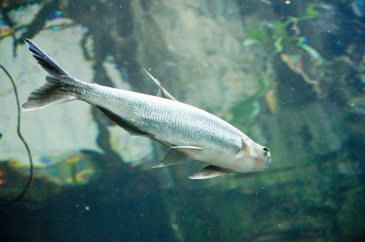 Ocean Fish4