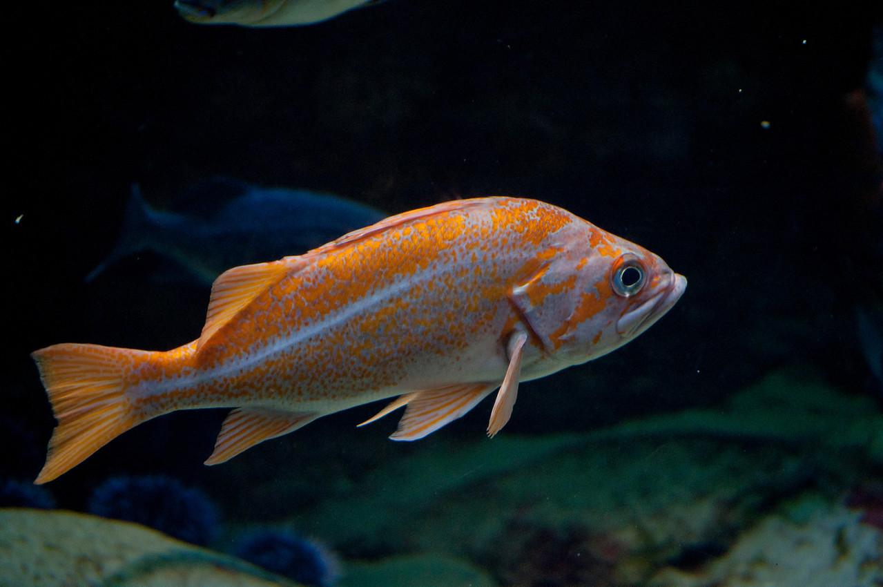 Ocean Fish2