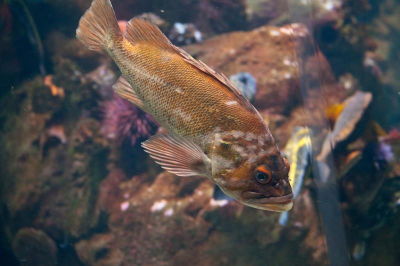 Ocean Fish1