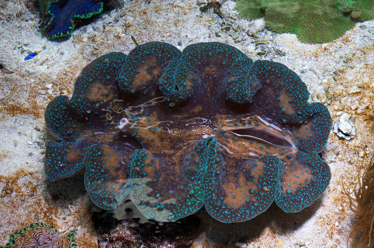 Sea Anemone 2