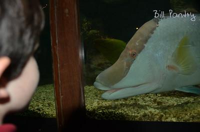 at the Aquarium (BAMZ)
