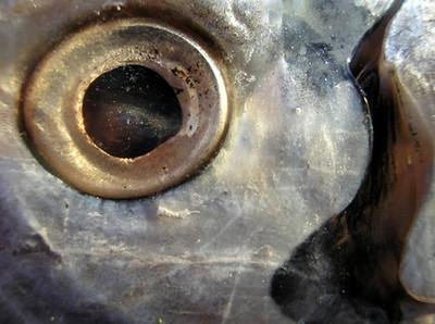 reflections and fish eyes