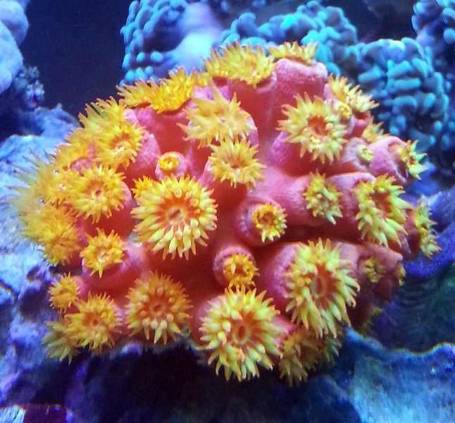 Front Page Photo ~ April 2013 Photo by JMMJ13902  ~  Sun Corals
