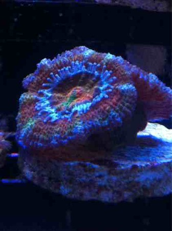 Front Page Photo ~ October 2014 Photo by Joker79 ~  Rainbow Acan