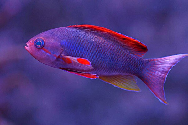 Front Page Photo ~ February 2014 Photo by JMMJ13902 ~  Anthias