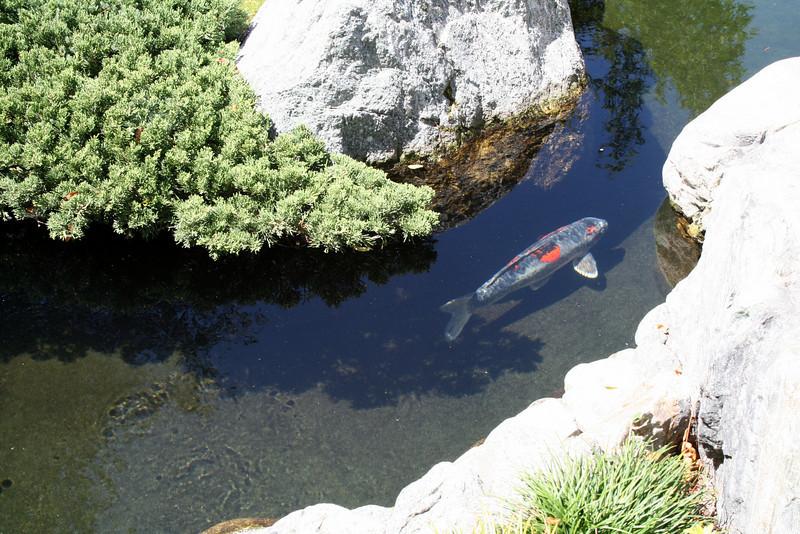 Koi Pond<br /> Japanese Friendship Garden<br /> Balboa Park<br /> 5 Sep 2010
