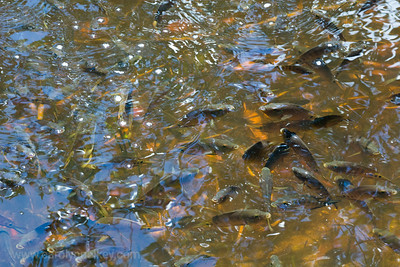 Shallows near Shore Teeming with Fish