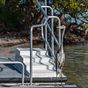 Railings with Great Blue Heron