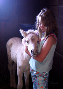 Riley & Andi 3 hours after birth  NORWEGIAN FJORD HORSE