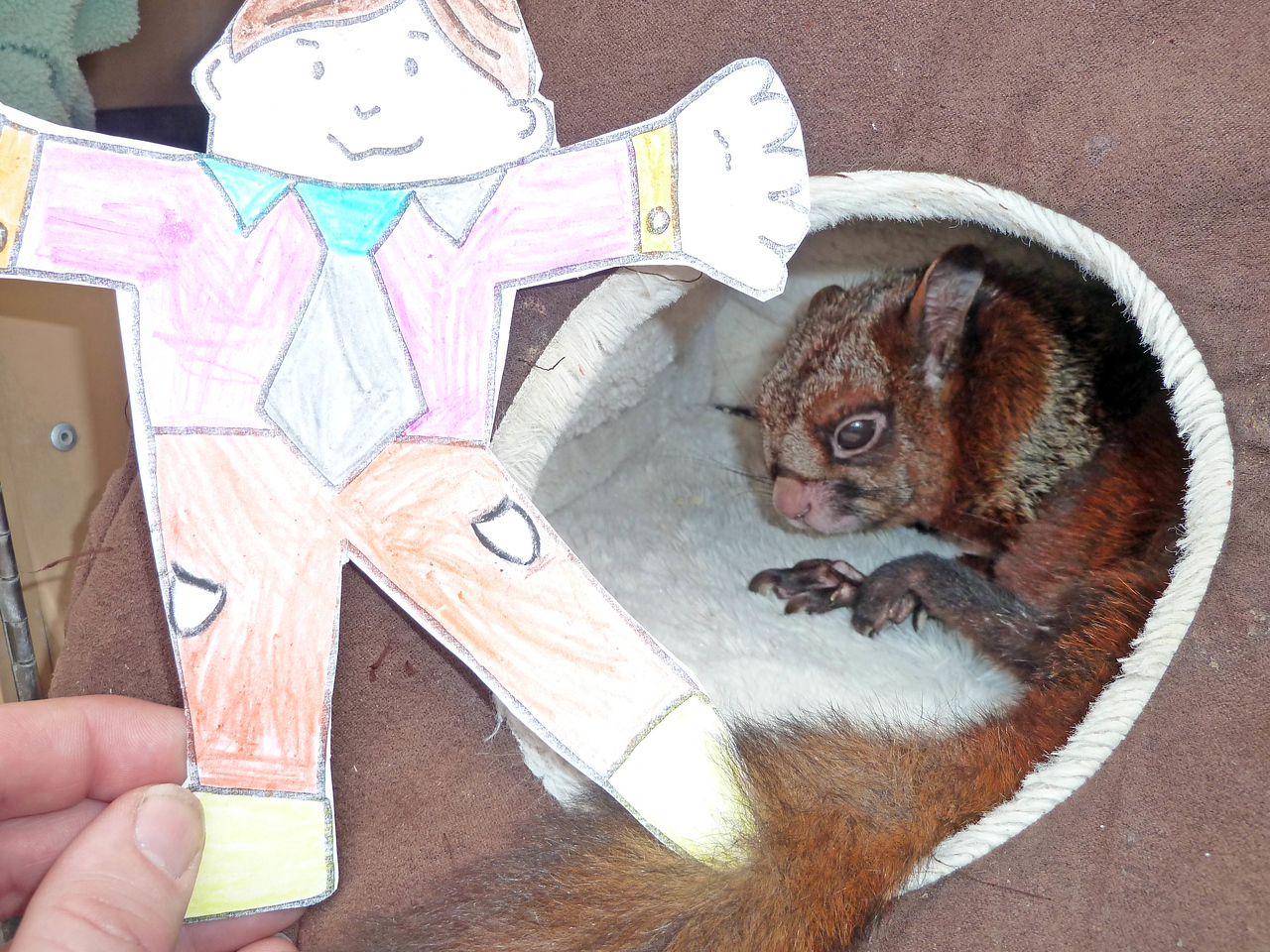Rocky the Flying Squirrel