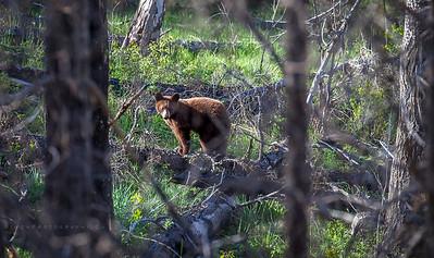 Hiding bear cub