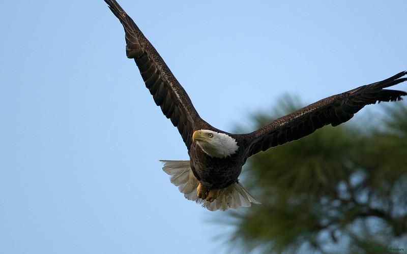 Gliding in...