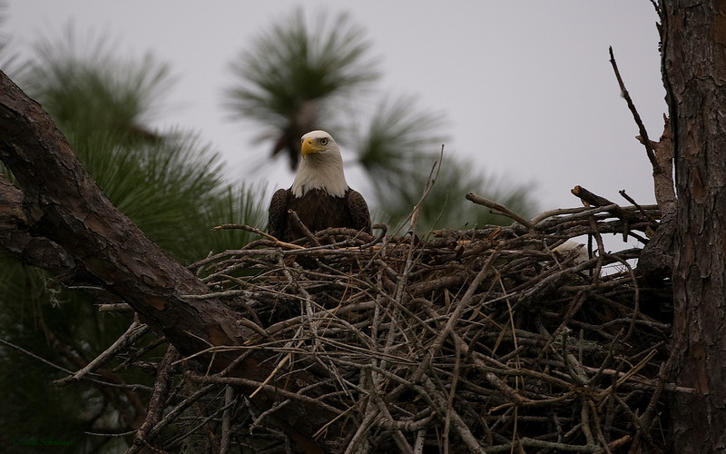 The happy couple spending a few short minutes in the nest.