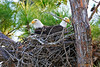 Florida 12/2010 : Images from the December 2010 visit to Florida.  The usual pair of eagles in Punta Gorda where not yet sitting on eggs, so... not as many eagle pics as I wanted.