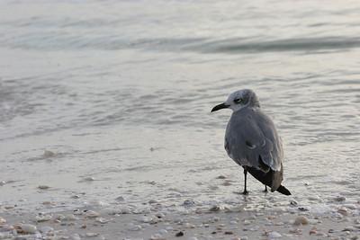 Florida trip critters
