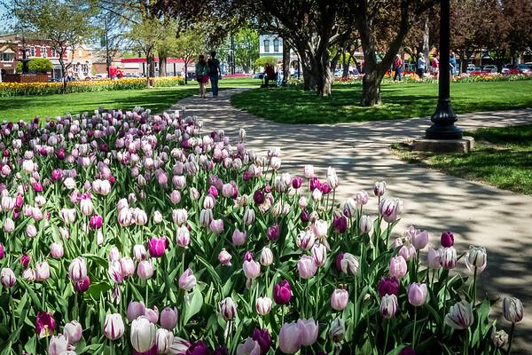 Tulip Festival in Pella Iowa