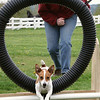 Zoie tire - We know it's not flyball, but Zoie is a Puget Hounds Flyball dog!