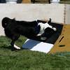 Aug2004Flyball 073.jpg